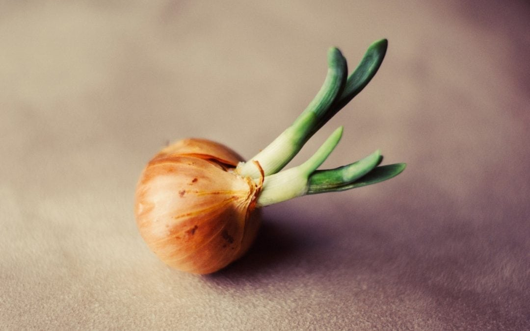 Why You Are Like An Onion